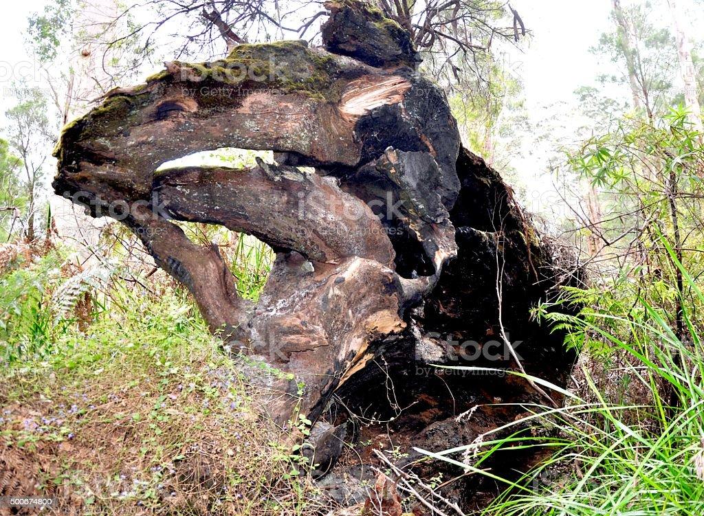 Fallen Tree: Burnt Base stock photo