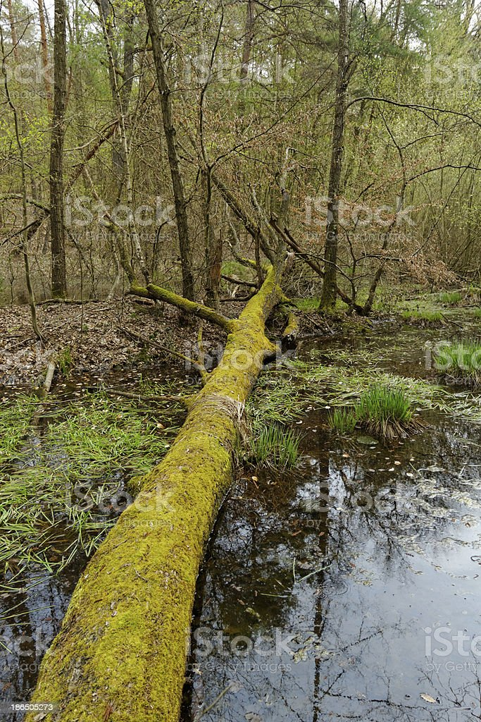 fallen tree by the lake royalty-free stock photo