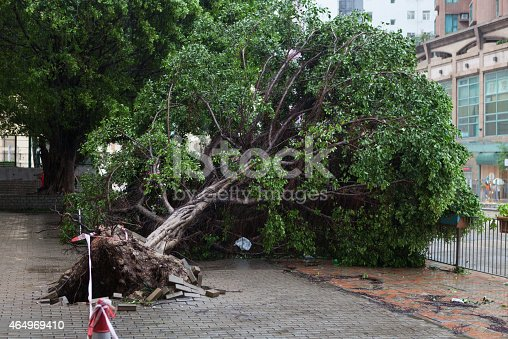 istock Fallen tree caused by typhoon 464969410