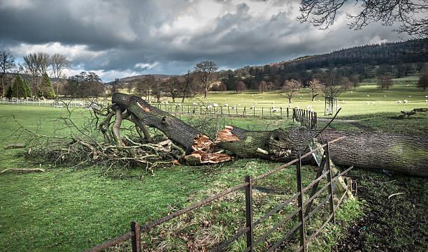 Fallen Tree Damage stock photo