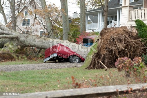 A red truck lies crushed beneath a huge tree in the aftermath of Hurricane Sandy, a powerful storm which crashed into the Eastern USA.