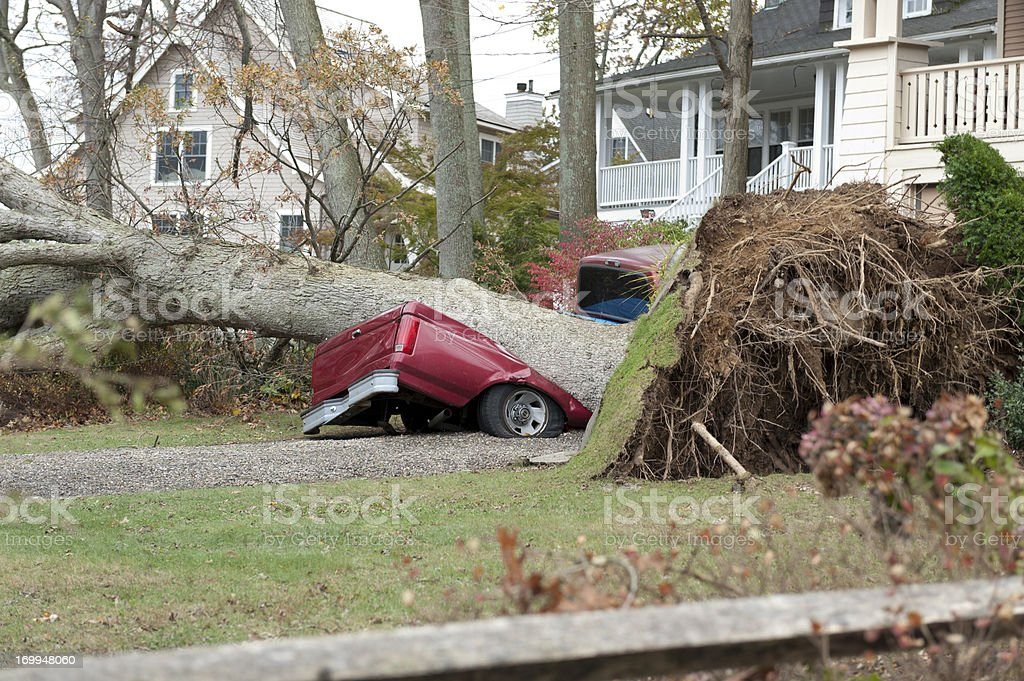 Fallen tree demolished a red truck during Hurricane Sandy stock photo