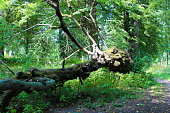 A fallen tree in an abandoned park near a pedestrian walkway.