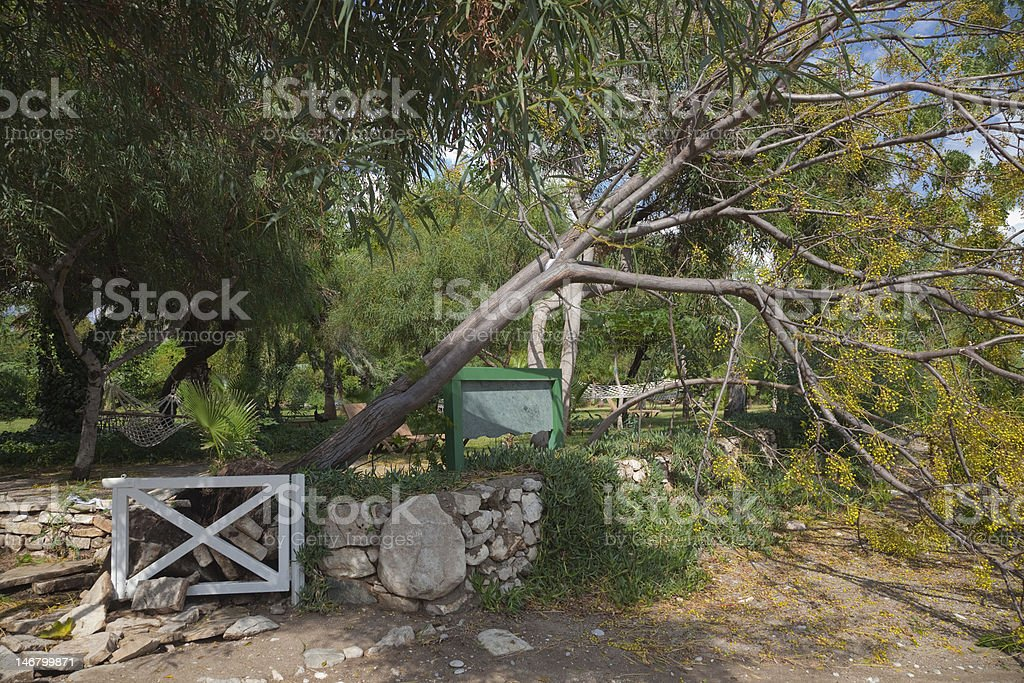 Fallen Tree in Garden after Storm royalty-free stock photo