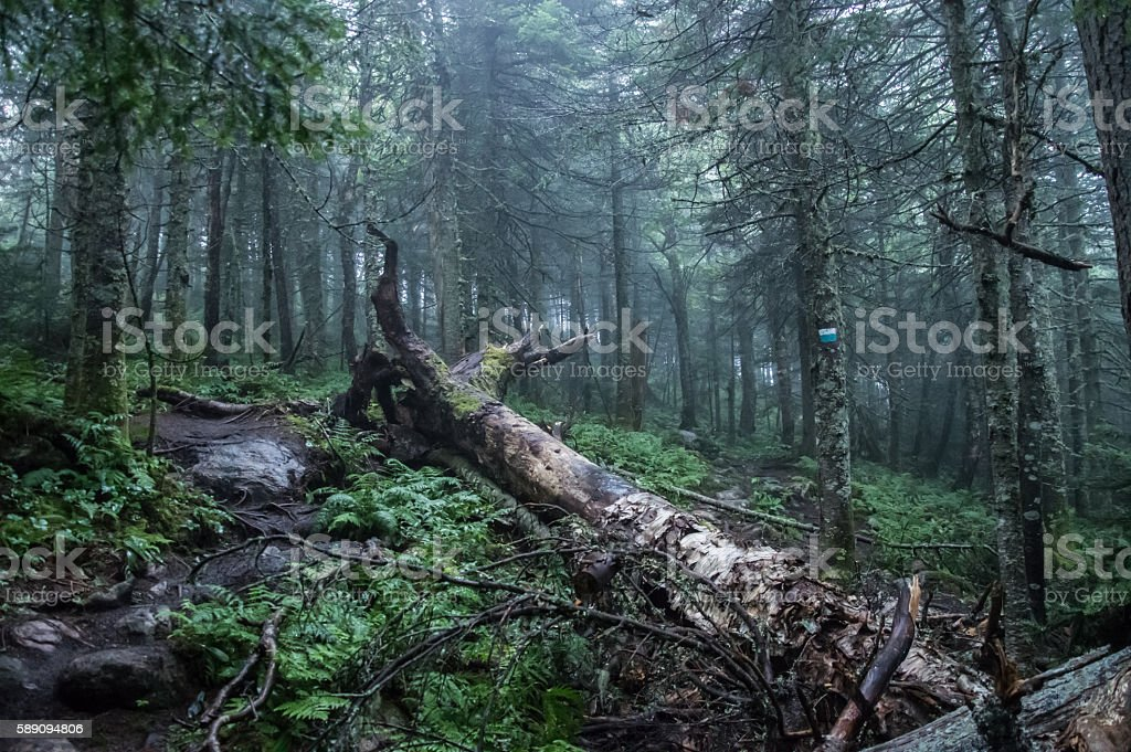 Fallen tree in the forest of Mont Tremblant National Park stock photo