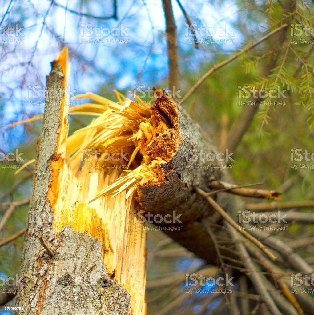 Fallen tree in the forest stock photo