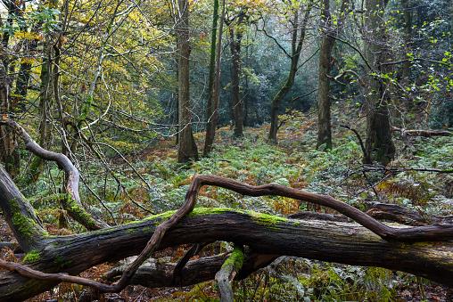 Fallen tree in the woods