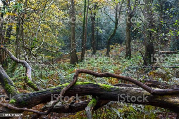 Photo of Fallen tree in the woods