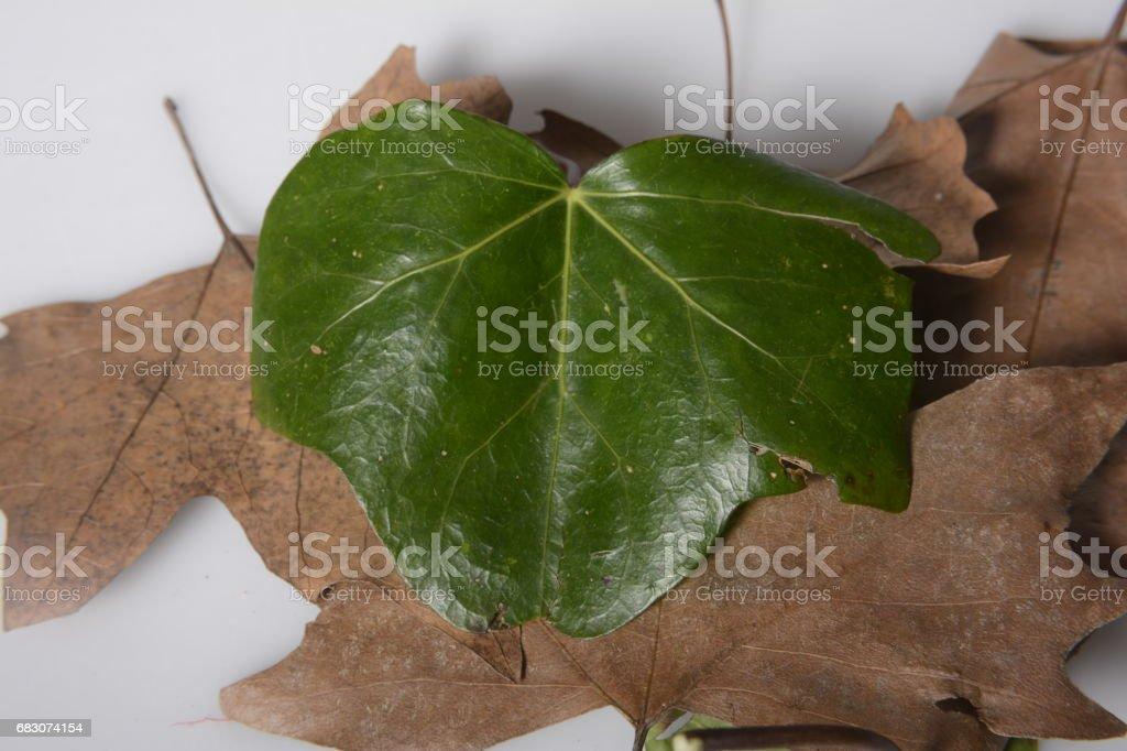 Fallen tree leaves. foto de stock royalty-free