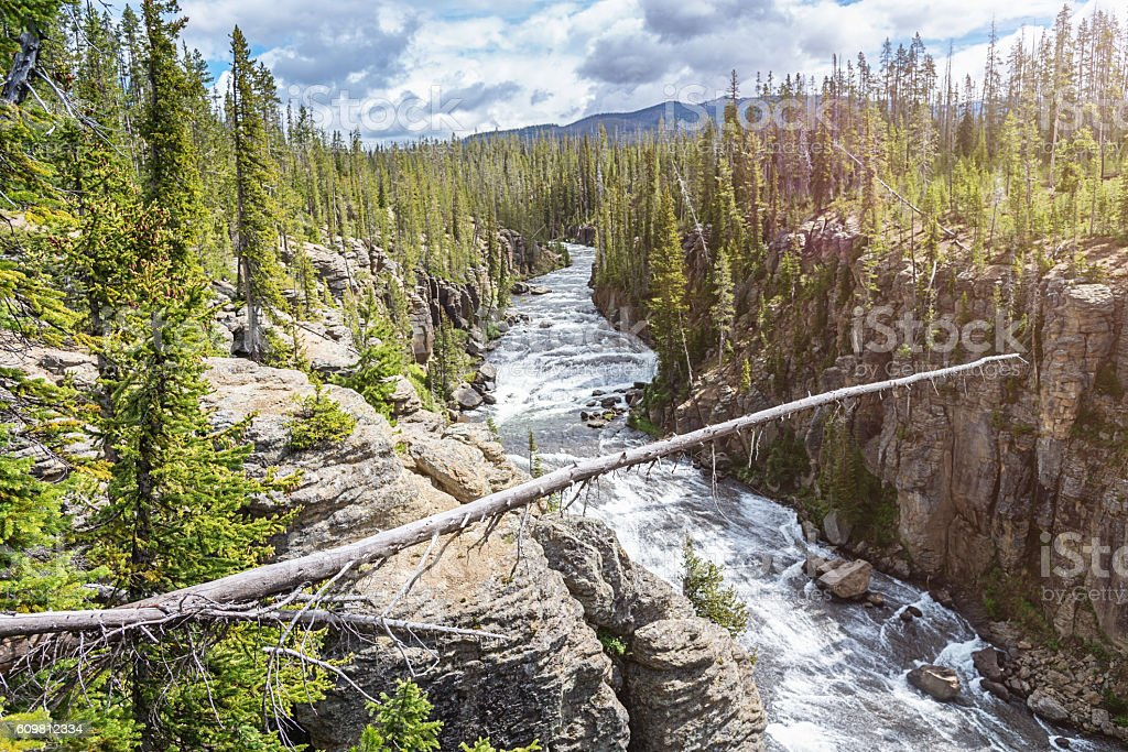 Fallen Tree Lewis River Yellowstone National Park Wyoming USA stock photo