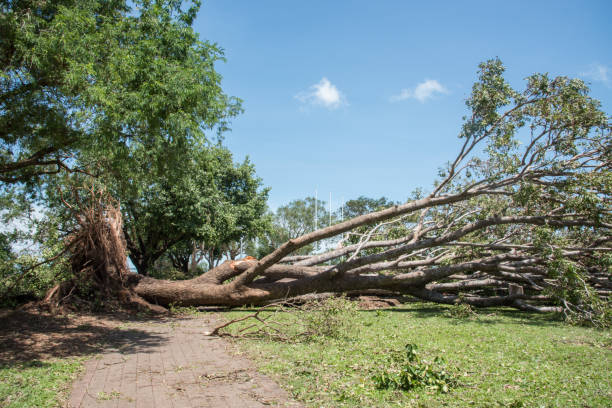 Fallen Tree on Foreshore Fallen tree lying across the brick foreshore sidewalk after Cyclone Marcus in Darwin, Australia. fallen tree stock pictures, royalty-free photos & images