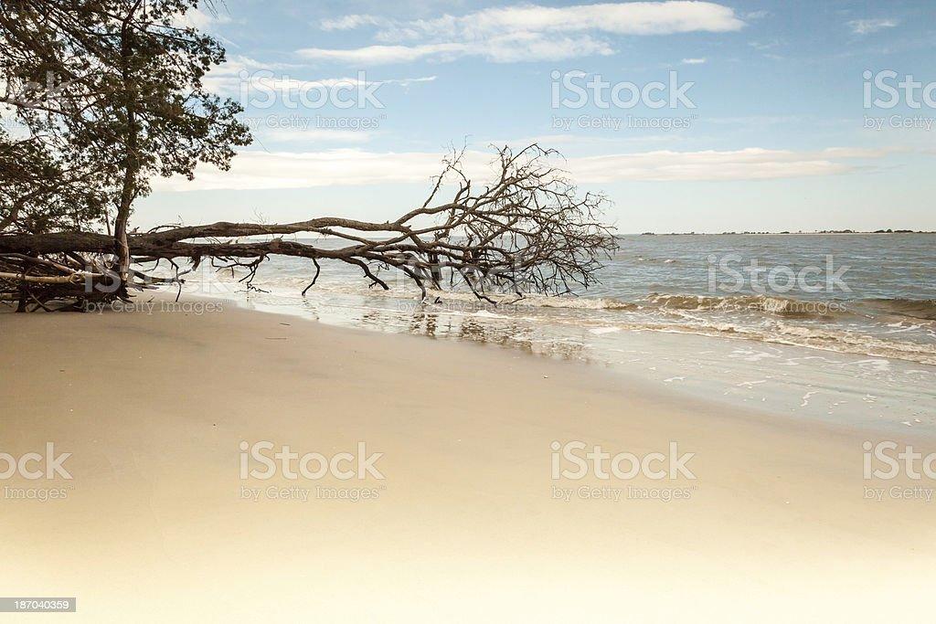 Fallen Tree on the Beach royalty-free stock photo