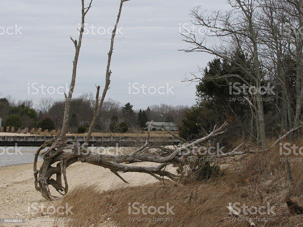 Fallen tree on the beach stock photo