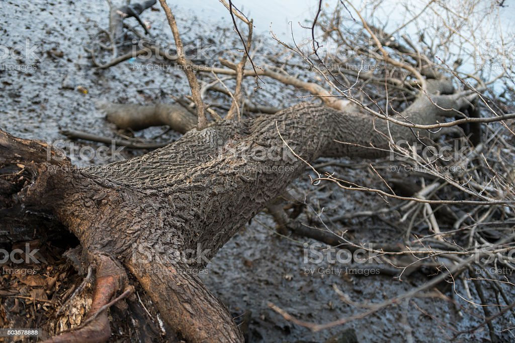 Fallen tree on the river bank stock photo