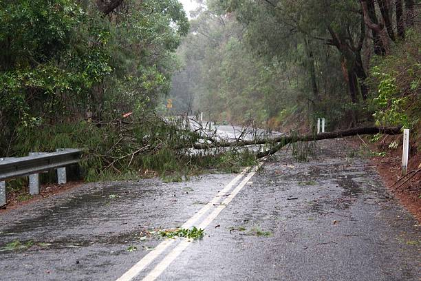 Fallen tree on the road Fallen tree on a remote road after a storm fallen tree stock pictures, royalty-free photos & images