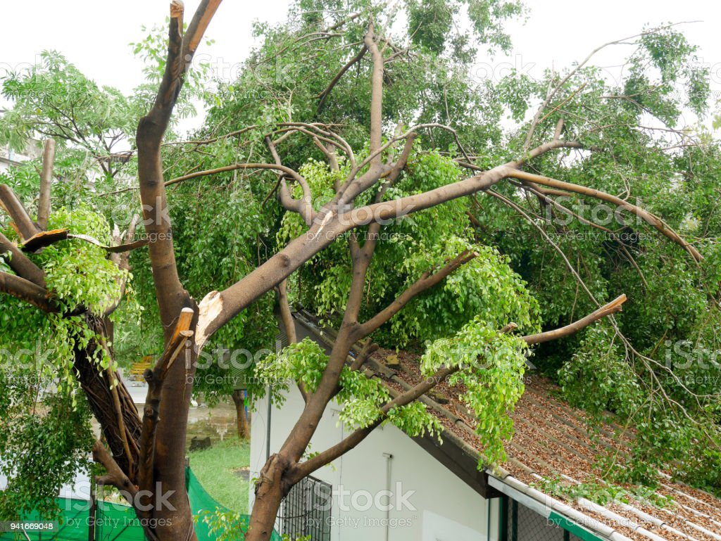 Fallen tree on the roof royalty-free stock photo