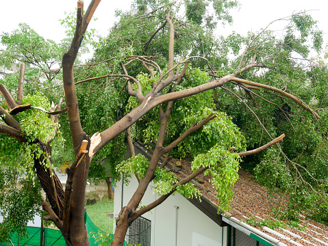 Fallen tree on the roof