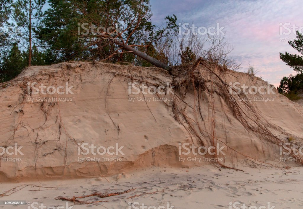 Fallen tree on the washed-up sand shore stock photo