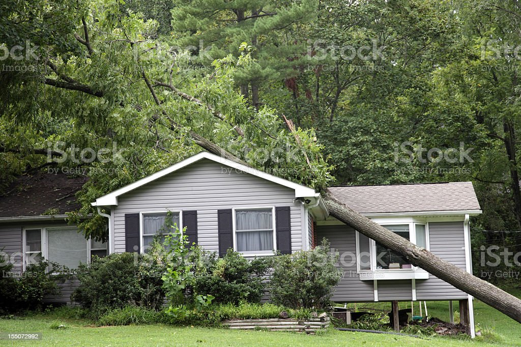 Fallen tree on top of grey bungalow house stock photo