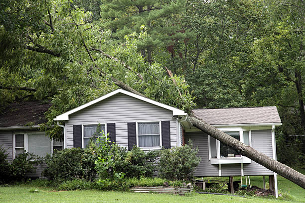 árbol en una casa - dañado fotografías e imágenes de stock
