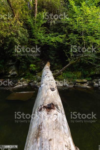 Photo of Fallen tree over the creek