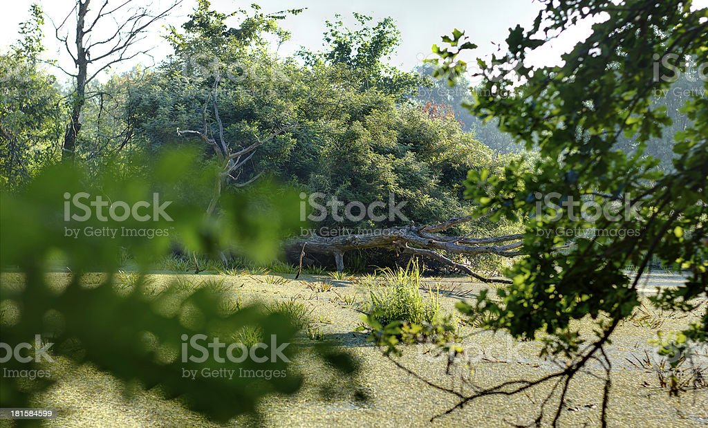 fallen tree royalty-free stock photo