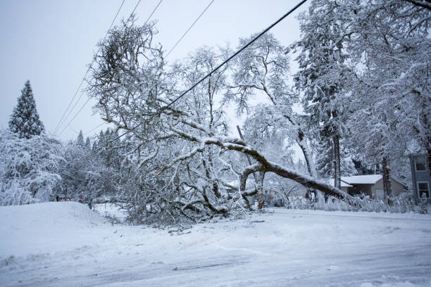 Fallen Tree Fallen Tree on Snowy Day fallen tree stock pictures, royalty-free photos & images
