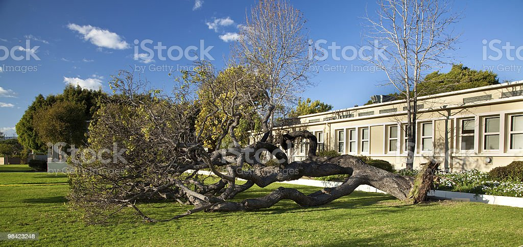 Fallen Tree royalty-free stock photo