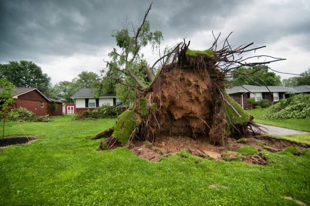 omgevallen boomwortels - tornado stockfoto's en -beelden