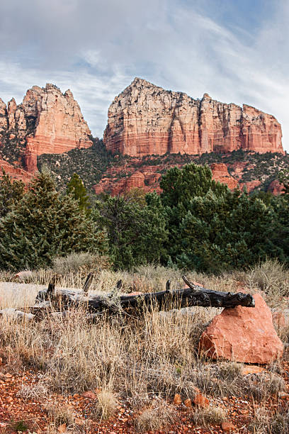 Fallen tree Sedona Arizona stock photo
