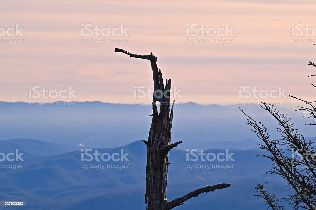 Fallen Tree Silhouettes Blue Mountains at Sunset stock photo