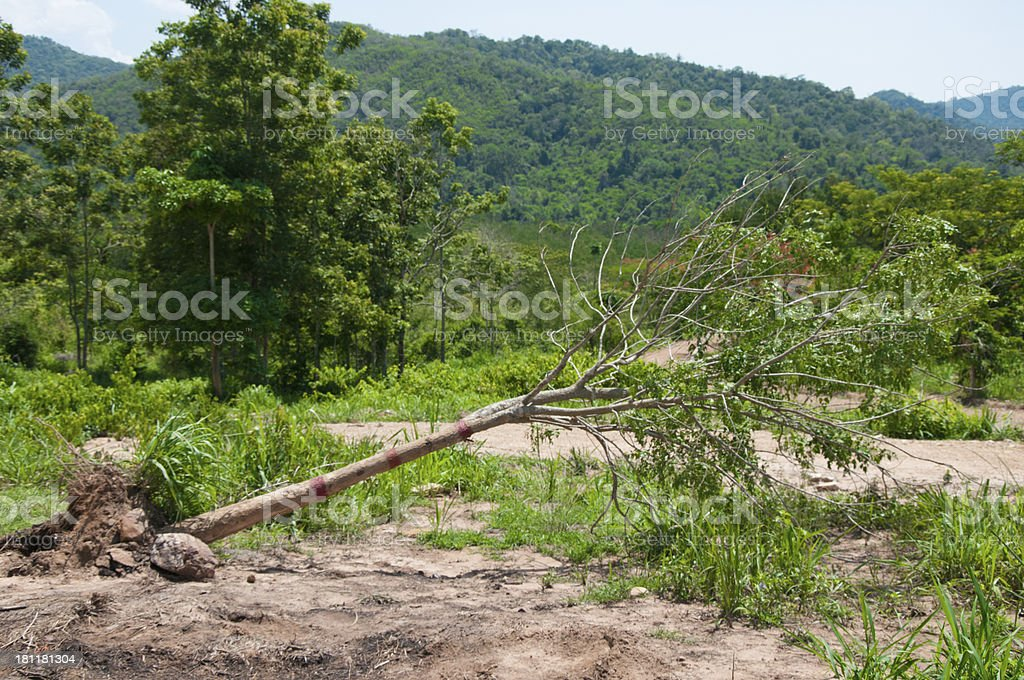 Fallen trees from storms royalty-free stock photo
