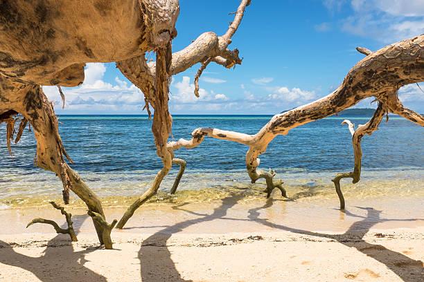 Fallen trees on a tropical sand beach stock photo