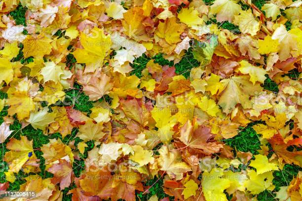 Photo of fallen yellow foliage, on the ground in the park, autumn, background