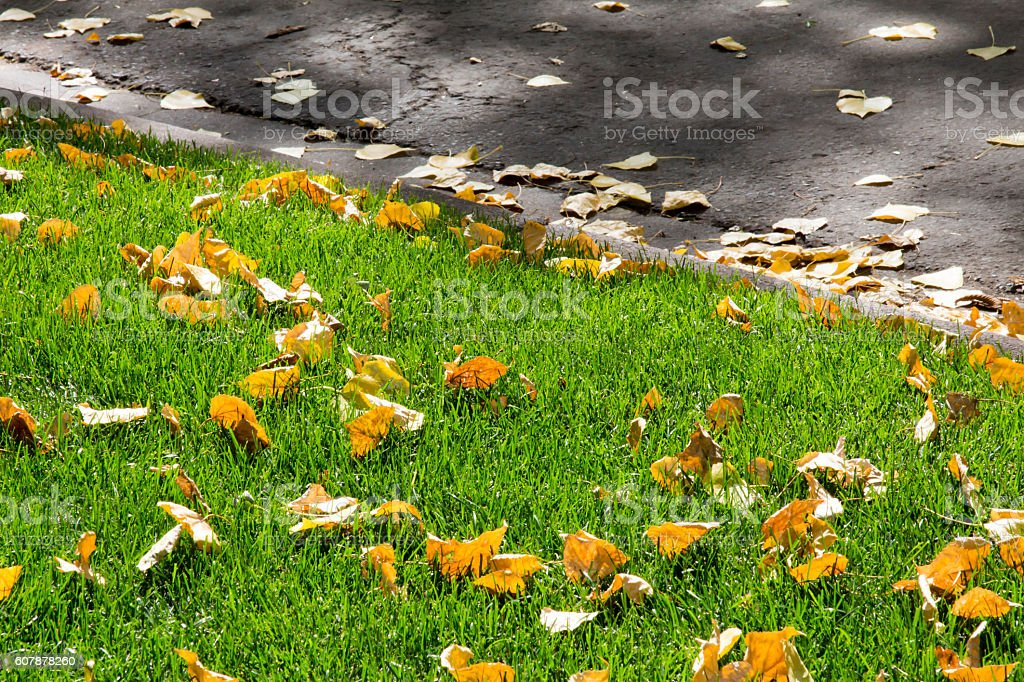 Fallen yellow leaves on green grass and curb stock photo