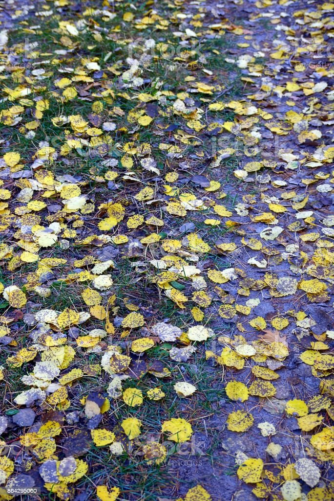 fallen yellow leaves on the grass in the park royalty-free stock photo