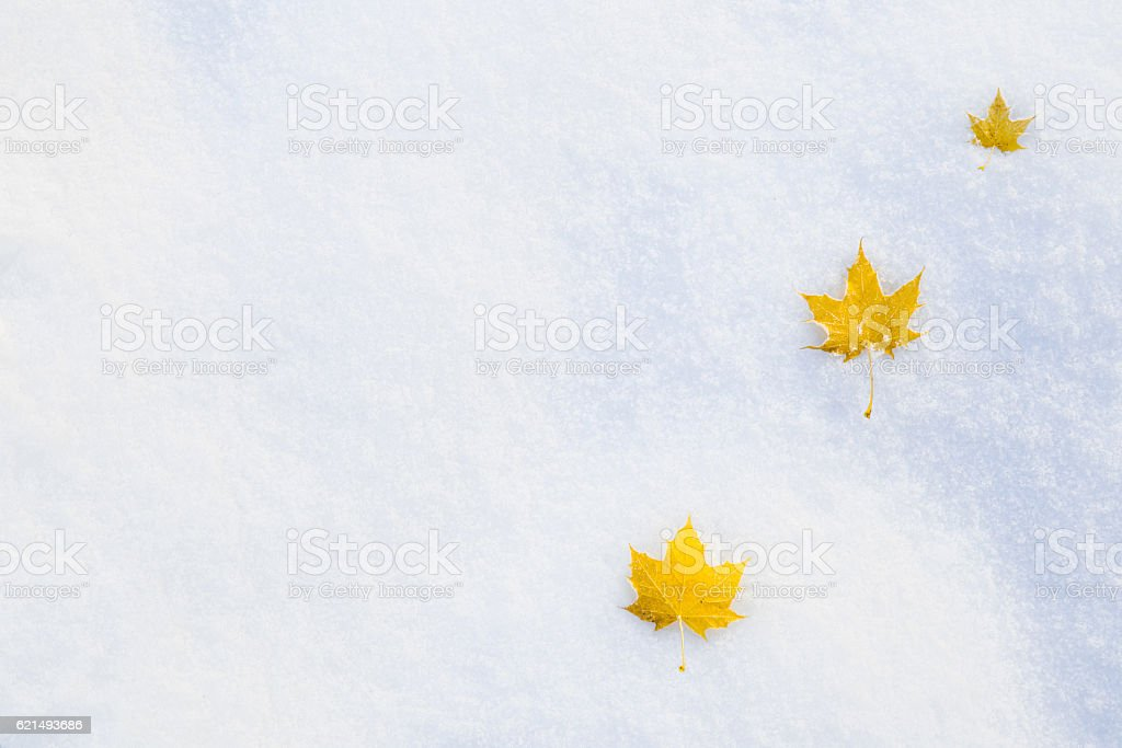Fallen yellow maple leaves on the snow. Winter background. foto stock royalty-free