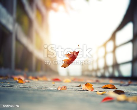 Idyllic autumn scene: Autumn leaf falling on wooden footpath by the lake.