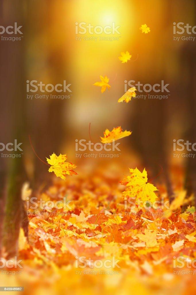 Folhas de outono caindo - foto de acervo