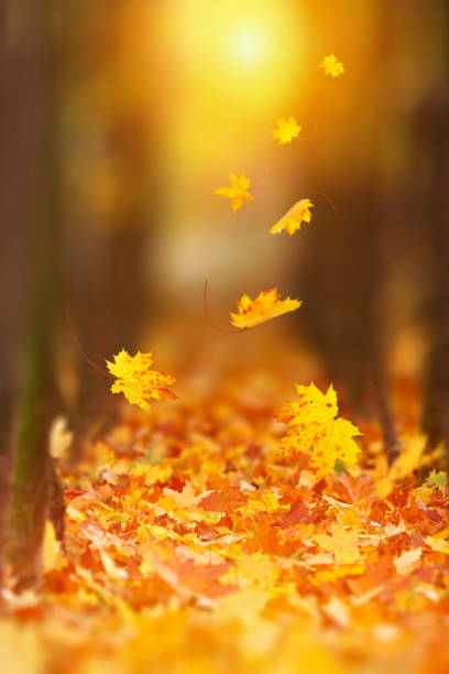 Falling Autumn Leaf Falling Autumn leaves in lively sunlight. fresh start morning stock pictures, royalty-free photos & images