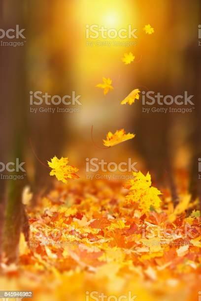 Photo of Falling Autumn Leaf