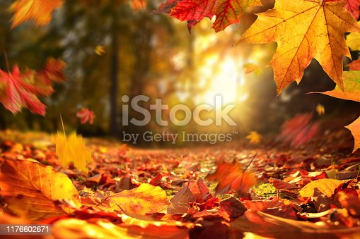 istock Falling Autumn leaves before sunset 1176602671
