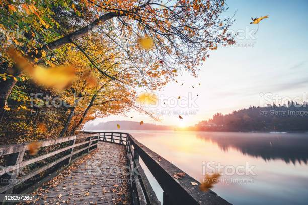 Photo of Falling Autumn Leaves By The Lake