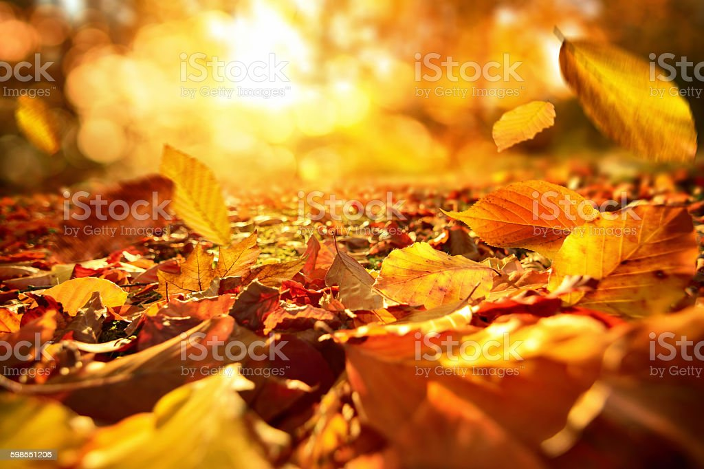 Falling Autumn leaves in lively sunlight - foto stock