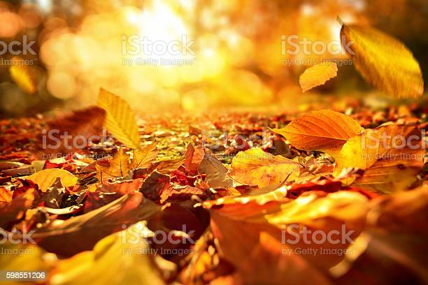 Photo of Falling Autumn leaves in lively sunlight