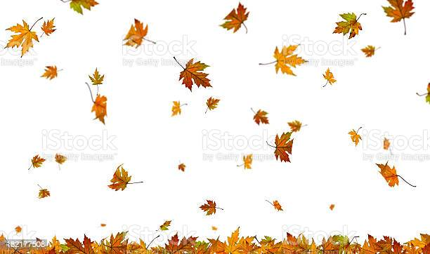Photo of Falling autumn leaves on plain white background