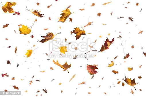 Large group of falling autumn leaves on white background.