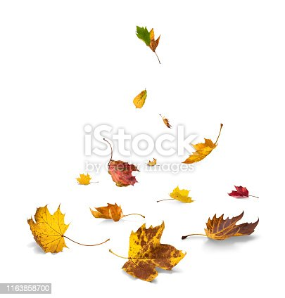 Autumn leaves on white background.