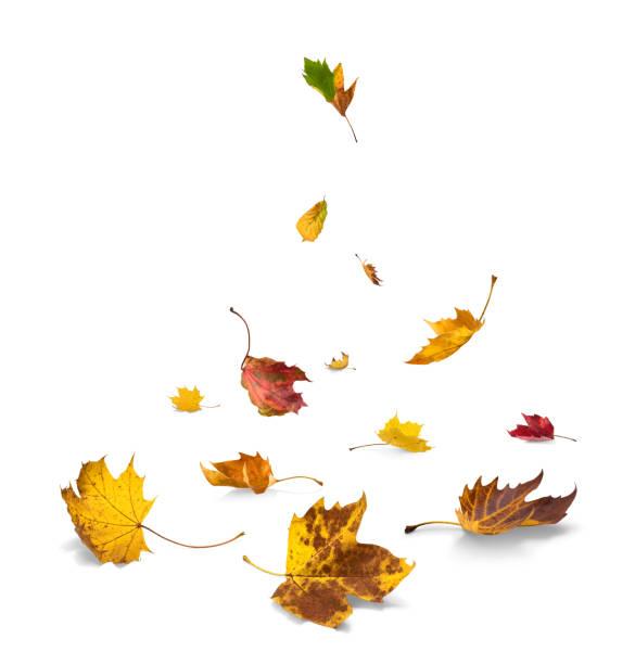 Feuilles d'automne tombantes sur le fond blanc - Photo