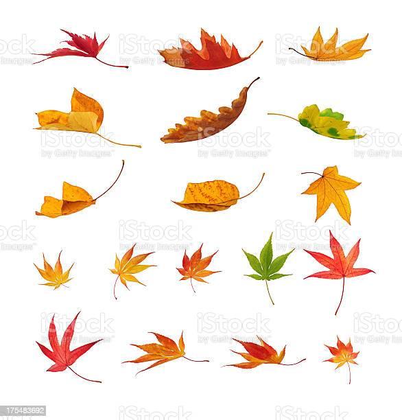 Photo of Falling Autumn Leaves On White Background